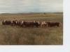 Bulls in 1983